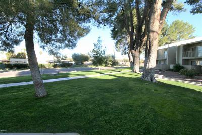 Tucson Condo For Sale: 814 S Langley Avenue #103