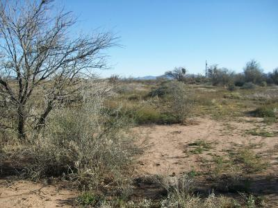 Residential Lots & Land For Sale: 16470 W Quinlin Trail