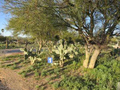 Tucson Residential Lots & Land For Sale: 9109 N Shannon (Lot 1) Road