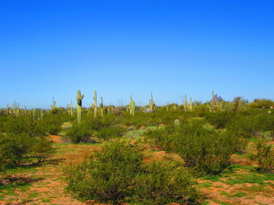 Residential Lots & Land For Sale: 33542 S Brahma Trail #4 ac.