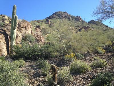 Tucson Residential Lots & Land For Sale: 3700 W Nebraska Street