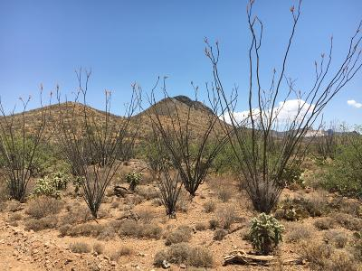 Residential Lots & Land For Sale: S Ocotillo Rim Place