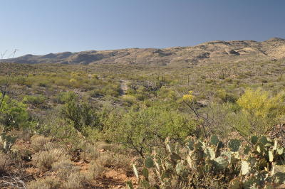 Tucson Residential Lots & Land For Sale: E Rincon Creek Ranch Road
