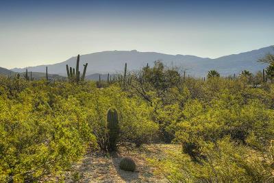 Tucson Single Family Home For Sale: 12350 E Prince Road