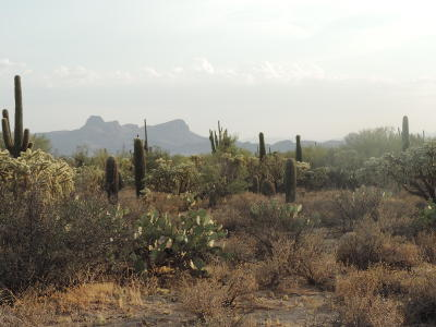 Tucson Residential Lots & Land For Sale: N Camino De Oeste