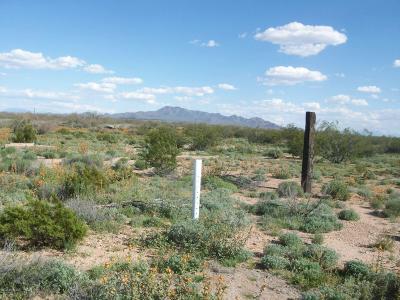 Tucson Residential Lots & Land For Sale: 7912 N Dakota Plains Trail