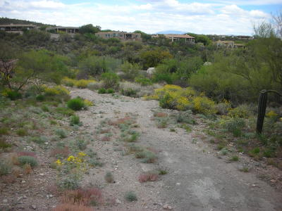 Tucson Residential Lots & Land For Sale: 6450 N Regal Manor Drive #5