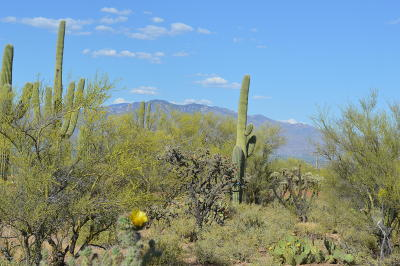Tucson Residential Lots & Land For Sale: 3440 N Double S Spur