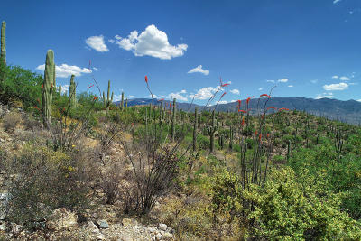 Residential Lots & Land For Sale: E Placita Del Inca #A