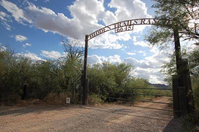 Marana Single Family Home Active Contingent: 6645 N Blanco Wash Trail