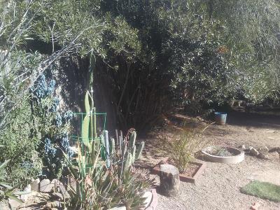 Tucson Single Family Home For Sale: 2812 W Via Del Santo