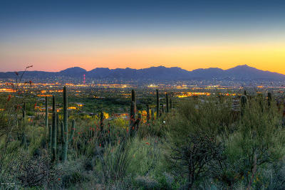 Tucson Residential Lots & Land For Sale: 1794 E Barrell Cactus Court #293