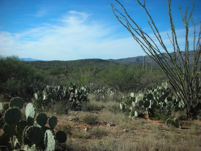 Tucson Residential Lots & Land For Sale: E Camino Dorotea Road
