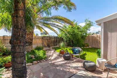 Tucson Single Family Home Active Contingent: 8637 N Siriga Way