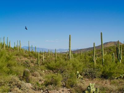 Tucson Residential Lots & Land For Sale: 4040 W Gates Creek Court W #20