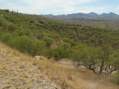 Rio Rico Residential Lots & Land For Sale: 474 Camino Providencia #133