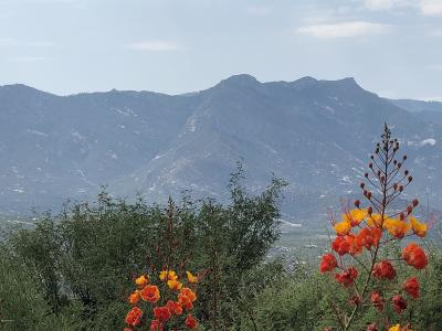 Tucson Residential Lots & Land For Sale: 36293 S Aaron Lane