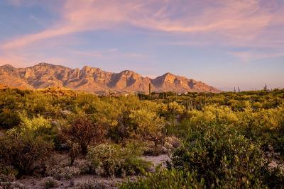 Oro Valley Residential Lots & Land For Sale: 15 W Shimmering Sand Place #Lot 493