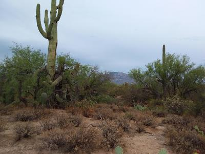 Residential Lots & Land For Sale: 2315 W Tangerine Road