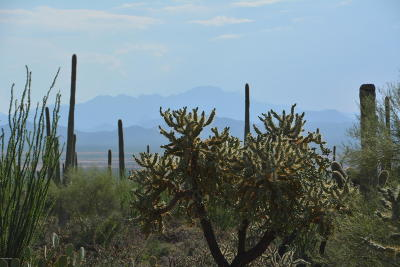 Tucson Residential Lots & Land For Sale: Via Loma Roja