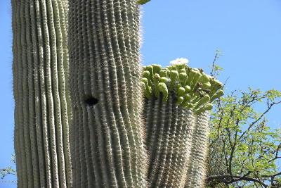 Tucson Residential Lots & Land For Sale: 5023 N Melpomene Way
