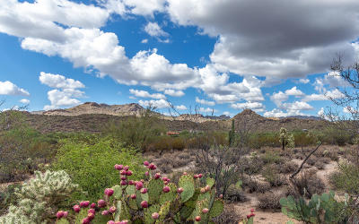 Tucson Residential Lots & Land For Sale: 3462 W Moore Road