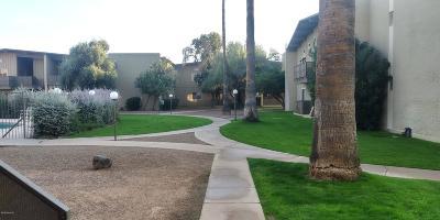 Tucson Condo For Sale: 2525 N Alvernon Way #E3