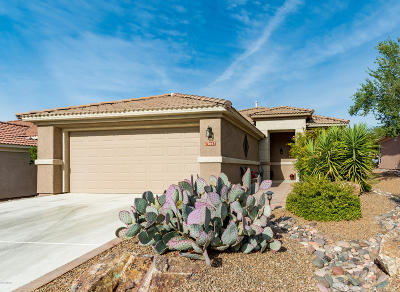 Marana Single Family Home Active Contingent: 13667 N Gold Cholla Place