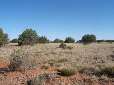 Navajo County Residential Lots & Land For Sale: 4524 E Pinto Road
