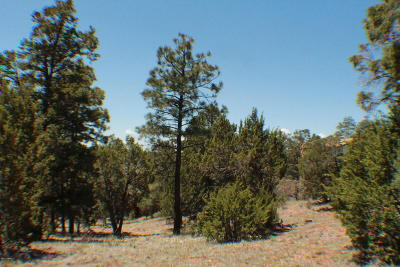 Overgaard Residential Lots & Land For Sale: 2226 Country Club Drive