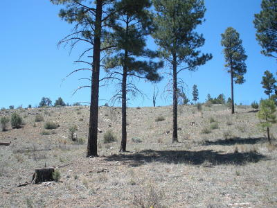 Heber AZ Residential Lots & Land For Sale: $58,000