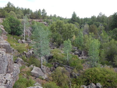 Lakeside Residential Lots & Land For Sale: Tbd N Canyon Creek Trail
