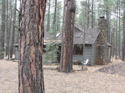 Pinetop Single Family Home For Sale: 2616 Grape Vine Road