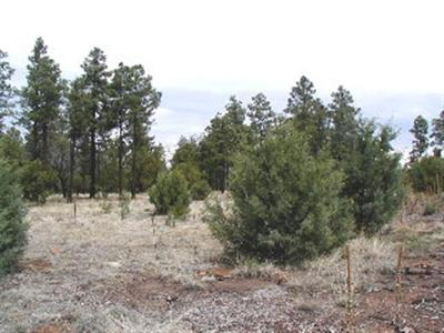Overgaard Residential Lots & Land For Sale: 2768 High Ridge Road