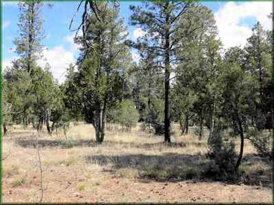 Overgaard Residential Lots & Land For Sale: 2864 Angel Trail
