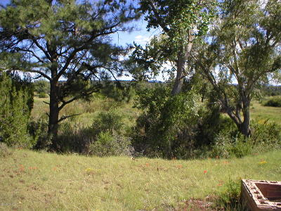 Show Low Residential Lots & Land For Sale: 2104 Summer Haven Lane