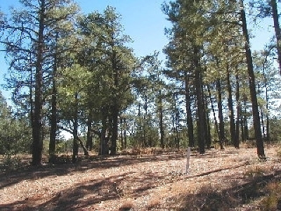 Navajo County Residential Lots & Land For Sale: 5893 Capps Trail