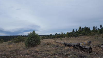 Heber AZ Residential Lots & Land For Sale: $75,000