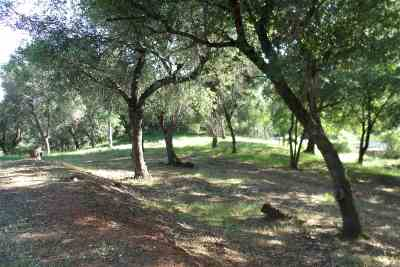 Sutter Creek Residential Lots & Land For Sale: 13532 North Star Court