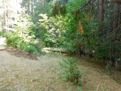 Residential Lots & Land For Sale: 27394 Ashland Drive