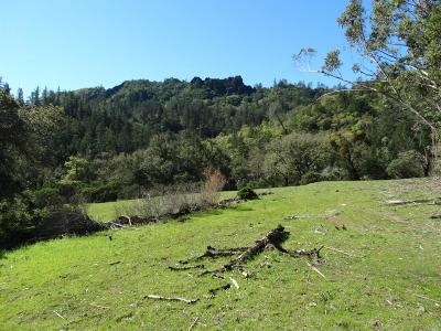 Calistoga Residential Lots & Land For Sale: 3860 Lake County Highway