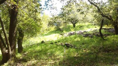 Marin County Residential Lots & Land For Sale: 59 Spring Lane