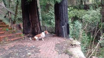 Guerneville Residential Lots & Land For Sale: 15683 Morningside Drive