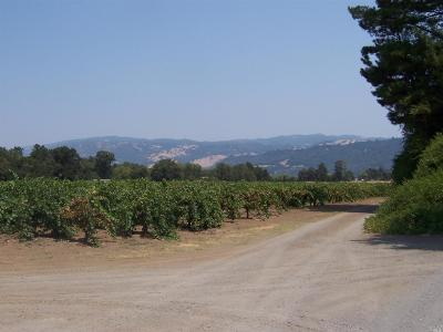Sonoma County Residential Lots & Land For Sale: El Rancho Drive