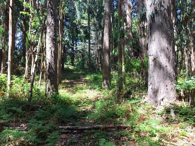 Fort Bragg Residential Lots & Land For Sale: 26950 North Highway 1 Highway