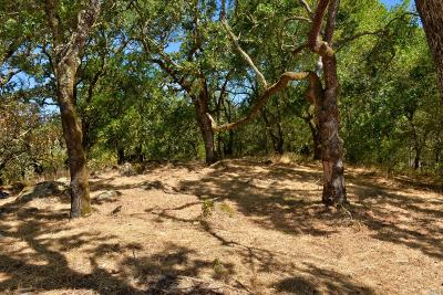 Santa Rosa Residential Lots & Land For Sale: 4030 Bridlewood Ct Road #Lot 1