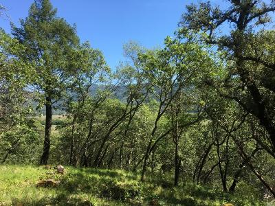 Calistoga Residential Lots & Land For Sale: Tucker Road