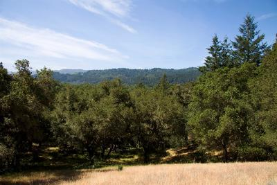 St. Helena Residential Lots & Land For Sale: Silverado Trail