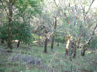 Napa Residential Lots & Land For Sale: 148 Sunny Hill Lane