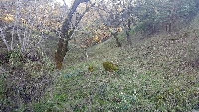 Ukiah Residential Lots & Land For Sale: Vista Del Lago Road